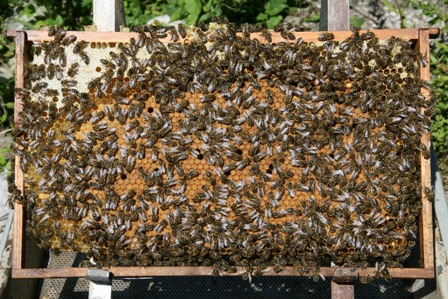 Лекарство для пчел - Ветом